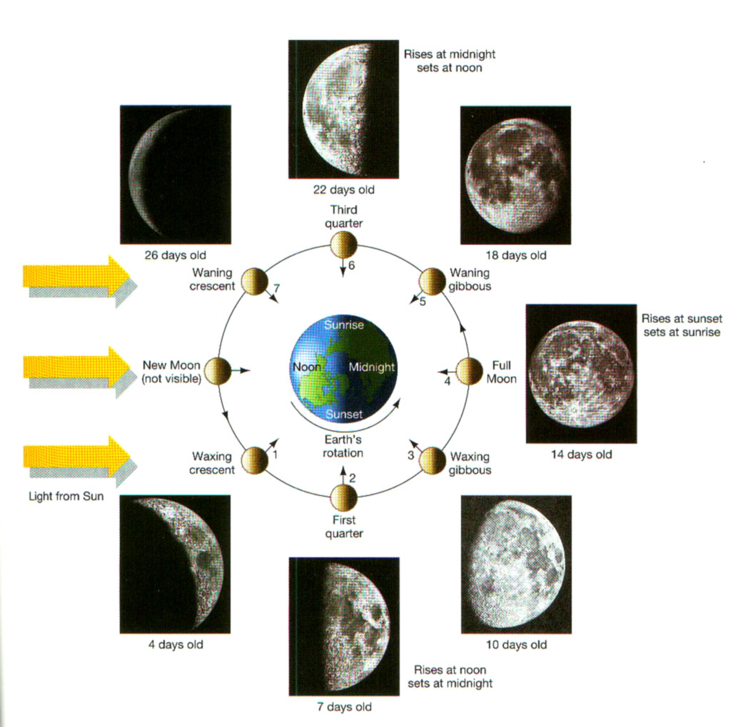 Washington state university introductory astronomy astr 150 f03 moon phase picture pooptronica Choice Image
